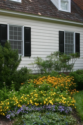Black-eyed Susans with annuals