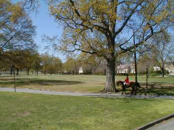 Large Shade Trees in the Spring