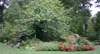 Perennials and Shrubbery